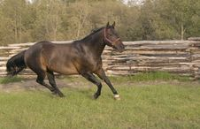 Free Running Horse. Royalty Free Stock Image - 3812516