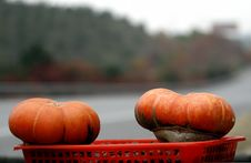 Free Pumpkin In The Autumn Royalty Free Stock Photos - 3813508