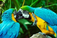 Free Parrots In Love Royalty Free Stock Photo - 3815275