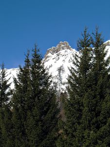 Snowy Summits And Firs Royalty Free Stock Photo