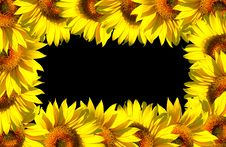 Free Small Sunflower Frame On Black Royalty Free Stock Photos - 3818838