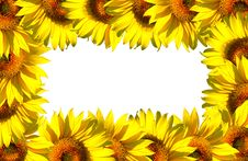 Free Small Sunflower Frame On White Royalty Free Stock Photos - 3818898