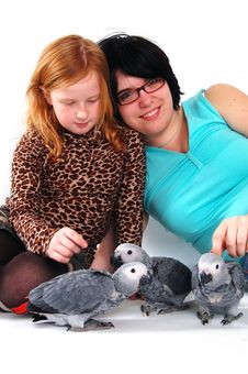 Free Red Tale Parrot On White With Female And Girl Royalty Free Stock Photo - 3819645