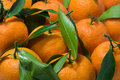Free Tangerines With Leaves Stock Image - 3820731