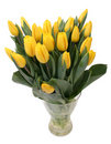 Free Yellow Tulips Royalty Free Stock Images - 3824379