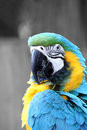 Free Blue And Gold Macaw Stock Photography - 3828822