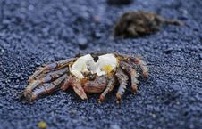 Free Crab On Shore No.1 Stock Photography - 3820752