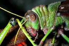 Free Grasshopper Stock Image - 3821031
