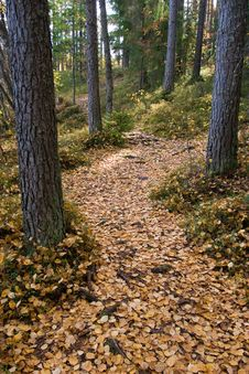 Free Path Covered By Leaves Royalty Free Stock Image - 3823176