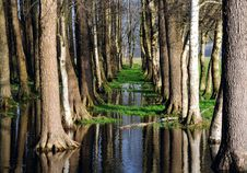 Free Trees And Sky Mirroring Stock Photography - 3823672