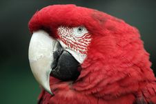 Free Parrot Ara Royalty Free Stock Photo - 3826065