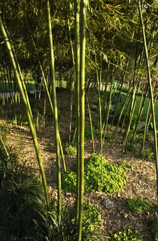 Free Bamboo And A Path Stock Image - 3827421