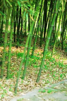 Free Bamboo And A Path Royalty Free Stock Photos - 3827958