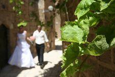 Free Wedding Stock Photography - 3828062