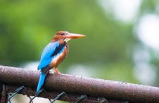 Free Kingfisher Stock Image - 3828431
