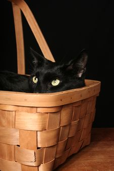 Free Black Cat In A Basket Stock Images - 3828484