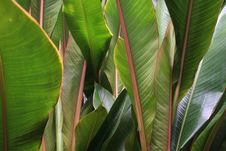Free Tropical Background Stock Image - 3828501