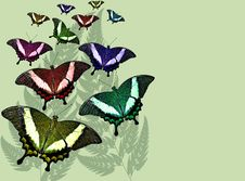 Free Butterflies On Fern Background Royalty Free Stock Image - 3829676