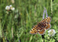 Free Butterfly Stock Photo - 3835400