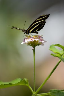 Free Butterfly On Flower Stock Photos - 3831393
