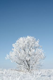 Free Alone Frozen Tree Royalty Free Stock Images - 3831909