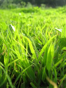 Free Green Grass Stock Images - 3831954
