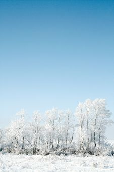 Free White Winter Stock Images - 3832014