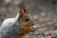 Free Squirrel Stock Photo - 3838670