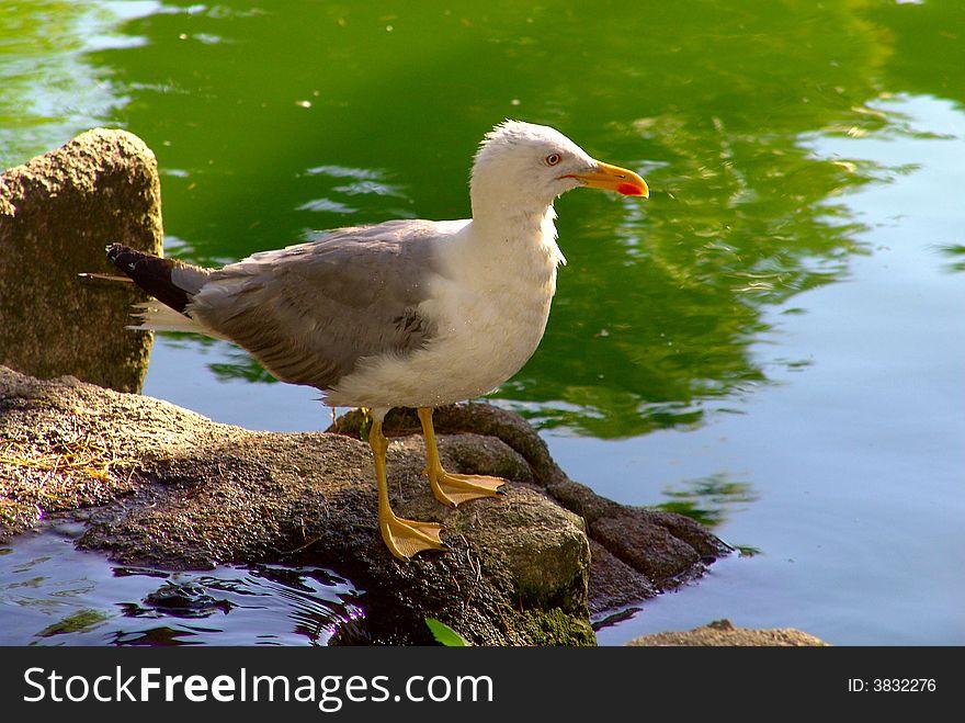 Seagull bird standing up