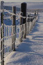 Free Frozen Fence Royalty Free Stock Photo - 3844355
