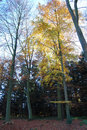 Free Autumn Forest Yellow Leaves Stock Photo - 3845520