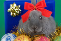 Free Grey Bunny And Christmas Decorations Stock Photography - 3848382