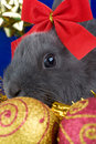Free Grey Bunny And Christmas Decorations Stock Photography - 3848392