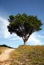 Free Single Tree Stock Photo - 3849580