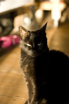 Black Cat In Light And Shadow Stock Photos