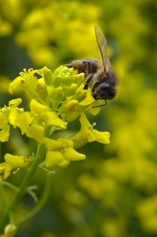 Free WASP Stock Image - 3840121