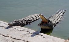 Free Crocodiles Royalty Free Stock Images - 3840679