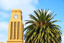Free Clock Tower And Tree Stock Images - 3843004