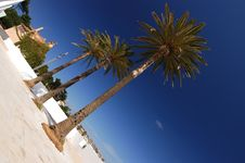Free Palm Trees Royalty Free Stock Photography - 3843407