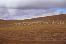 Free Sheep In The Meadows Royalty Free Stock Images - 3844309