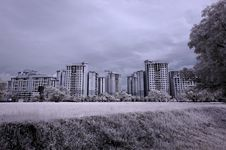 Infrared Photo – Modern Building And Tree Stock Photos