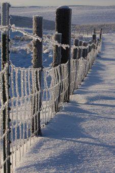Free Frozen Fence Royalty Free Stock Photo - 3844355
