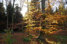 Free Autumn Tree Orange Royalty Free Stock Photos - 3845138