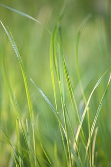 Free Grass Details. Growth Stock Photos - 3845433