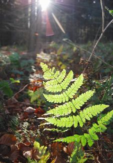 Fern (close) Royalty Free Stock Images