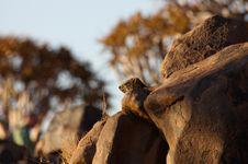 Free Rock Hyrax Between Rocks Stock Photography - 3846222