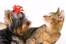 The Puppy And Kitten Royalty Free Stock Image