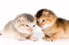Free Kittens In Studio Royalty Free Stock Images - 3846429