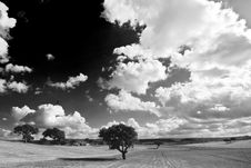 Free Sky And Trees Stock Image - 3846711