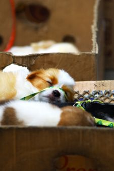 A Sleepy Dog Royalty Free Stock Image